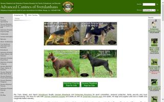 Advanced Canines of Svetdanhaus
