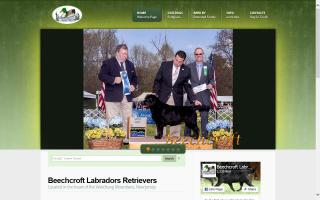 Beechcroft Labrador Retrievers
