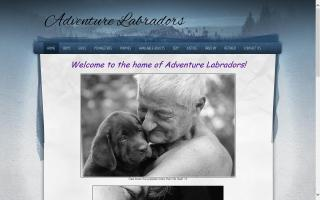 Adventure Labradors at Ledgewood