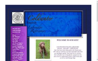 Coldwater Labrador Retrievers