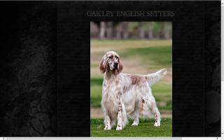 Oakley English Setters