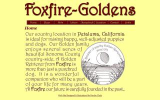 Foxfire Golden Retrievers