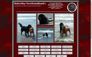 Baker Bay Newfoundlands