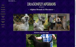 Dragonfly Afghan Hounds