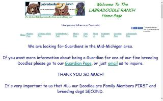 Miniature Medium and Standard F1b Family Raised Labradoodles