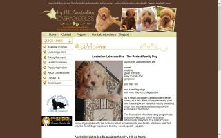 Ivy HIll Australian Labradoodles