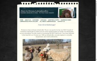 Dare to Dream Labradoodles