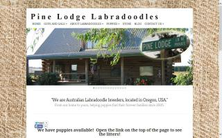 Pine Lodge F1 Labradoodles