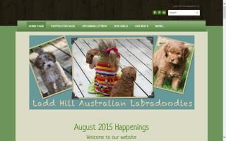 Ladd Hill Labradoodles