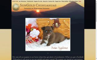 SunGold Chihuahuas