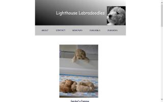 Lighthouse  Labradoodles