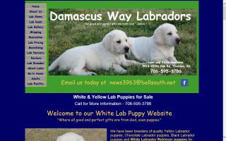 Damascus Way Labradors