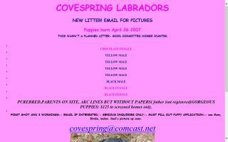 Covespring Labrador Retrievers