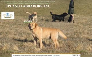 Upland Labradors, Inc