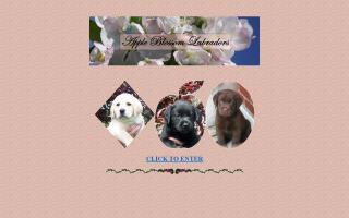 Apple Blossom Labradors