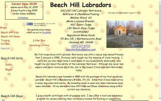 Beech Hill Labradors