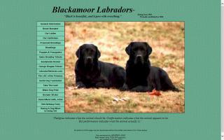 Blackamoor Labradors