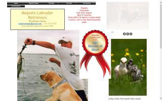 Massachusetts Labrador Retriever Breeders Directory - O Puppy!