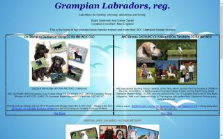 Grampian Labradors