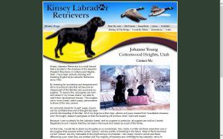 Kinsey Labrador Retrievers