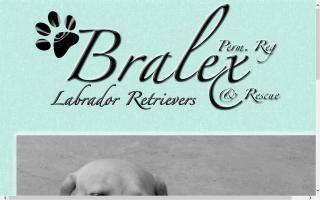Bralex Labradors