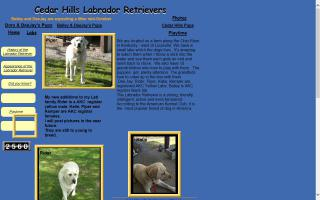 Brenda's Yellow Labrador Retrievers