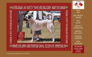 Anatolian Shepherd Dog Club of America, Inc. - ASDCA