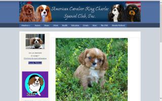 American Cavalier King Charles Spaniel Club, Inc. - ACKCSC