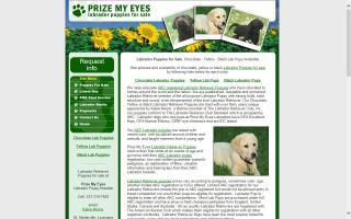 Prize My Eyes Labrador Retrievers