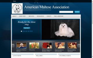 American Maltese Association - AMA