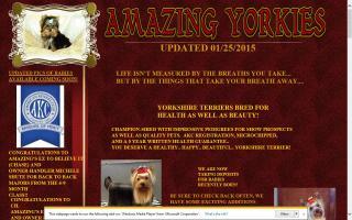 Amazing Yorkies