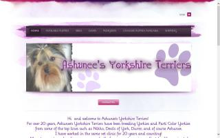 Ashunee Yorkshire Terriers