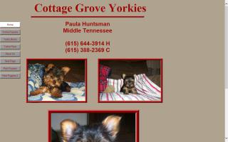 Cottage Grove Yorkies