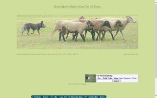 Bryn Mawr Australian Cattle Dogs