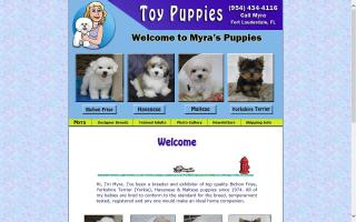 Toy Puppies
