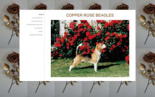 Copper Rose Beagles