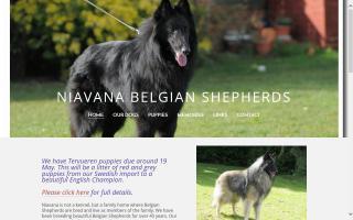 Niavana Belgian Shepherds