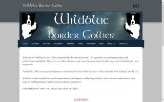 Wildblue Border Collies
