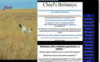 Chief's Brittanys