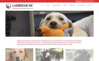 Lab Rescue of North Carolina