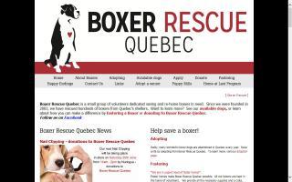 Boxer Rescue Quebec