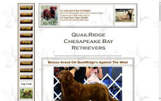 QuailRidge Chesapeake Bay Retrievers
