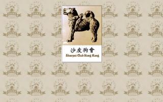 Sharpei Club Hong Kong