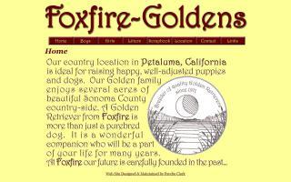 Foxfire Golden Retrievers