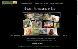 Brier Golden Retrievers