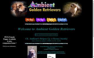 Ambient Golden Retrievers