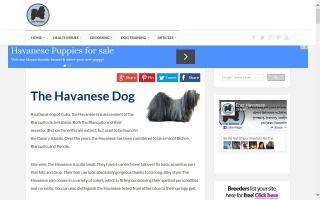 ERA'S Havana Silk Dogs