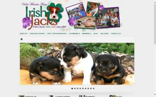 IrishJacks Jack Russell Terriers