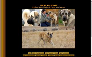 TAKAS Anatolian & Central Asian Shepherds