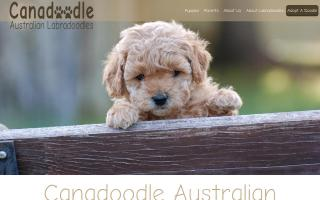 Canadoodle Australian Labradoodles